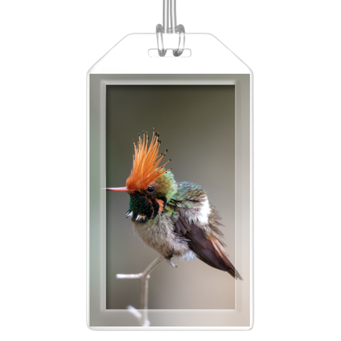 Rufous-crested Hummingbird Luggage Tag