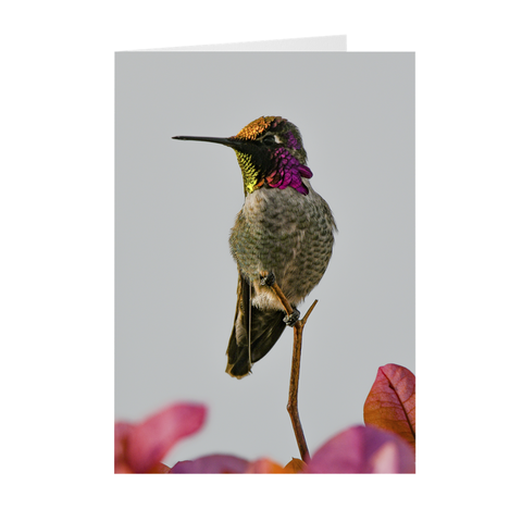 Image of Anna's Hummingbird - Folded Note Cards