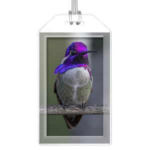 Costa's Hummingbird Luggage Tag - Set of 2