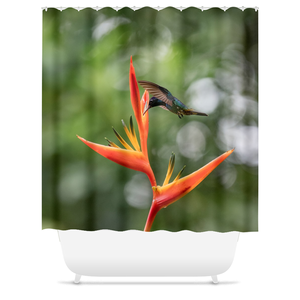 Golden-tailed Sapphire Hummingbird on Heliconia Shower Curtain