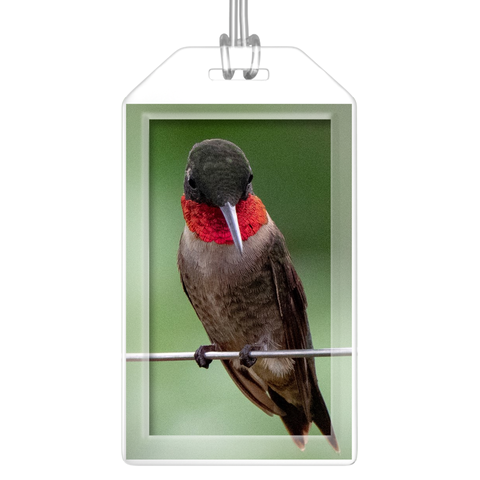 Ruby-throated Hummingbird Luggage Tags (Set of 2)