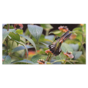 Stripe-tailed Hummingbird Beach Towel