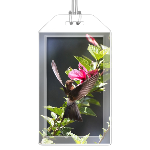 Image of Giant Hummingbird Luggage Tags - Set of 2