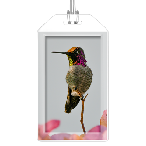 Anna's Hummingbird Luggage Tags - Set of 2