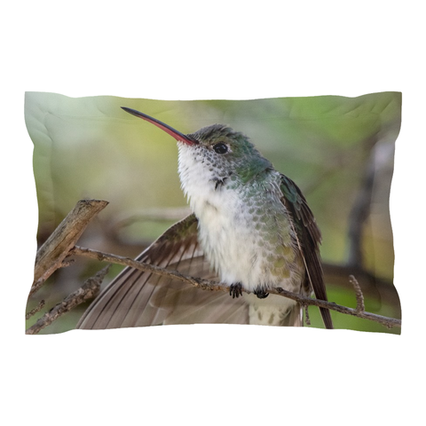 White-bellied Hummingbird Pillow Shams