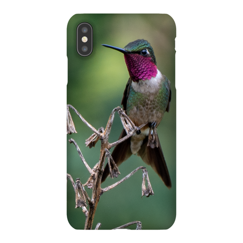 Amethyst Woodstar Hummingbird Phone Case