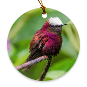 Snowcap Hummingbird Porcelain Ornament