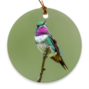 White-bellied Woodstar Hummingbird Porcelain Ornament