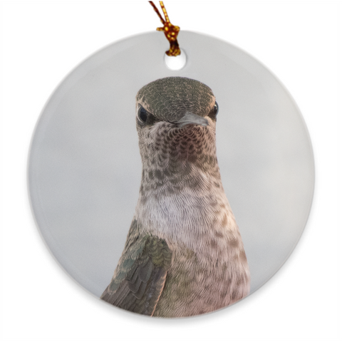 Image of Bah Humbug! Juvie Male Anna's Hummingbird Porcelain Ornament