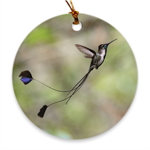 Marvelous Spatuletail Hummingbird Porcelain Ornament