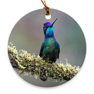 Talamanca Hummingbird Porcelain Ornament