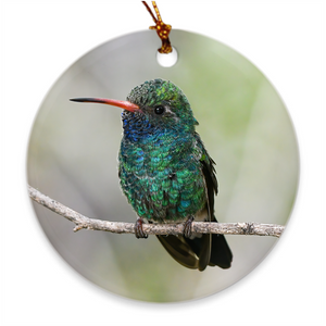 Broad-billed Hummingbird Porcelain Ornament