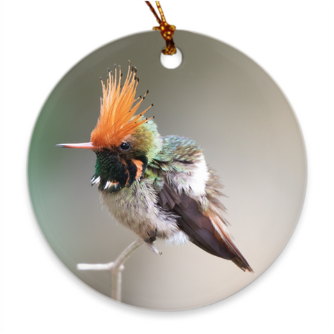 Rufous-crowned Coquette Hummingbird Porcelain Ornament