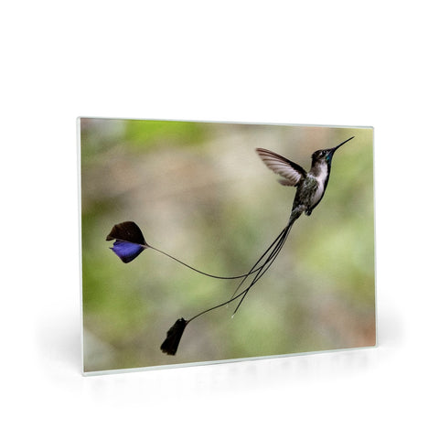 Image of Marvelous Spatuletail Hummingbird Glass Cutting Board