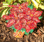 Poinsettia by Sunshiners®