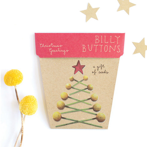 Sow n Sow Christmas Greetings Billy Buttons Gift of Seeds