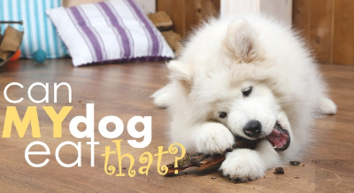 Are Bananas Good For Dogs? 33 Foods Dogs Can (& Can't) Eat