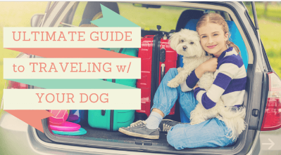 How to Travel with Your Dog (An Ultimate Guide)