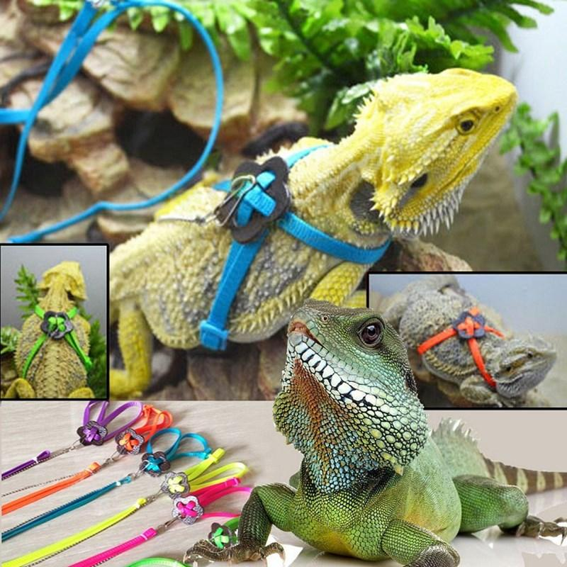 Lizard Harness Leas