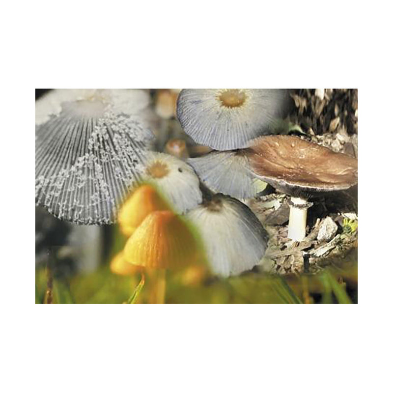 4 Mushrooms <br>Combination Essence <br>(Mycena, Coprinus Auricomus, Little Inky Cap, and Giant Stropharia)