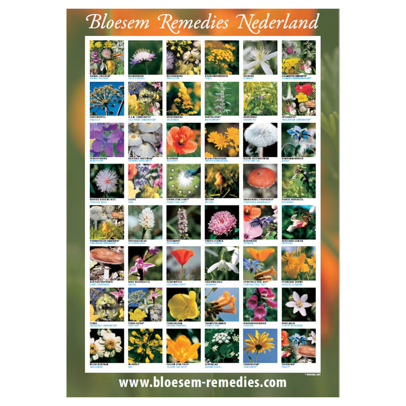Downloadable PDF Repertory of the Bloesem Flower Essences