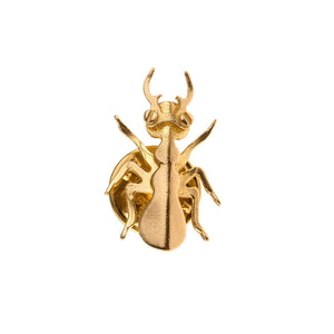 Pin from Insects collection - IB14-1