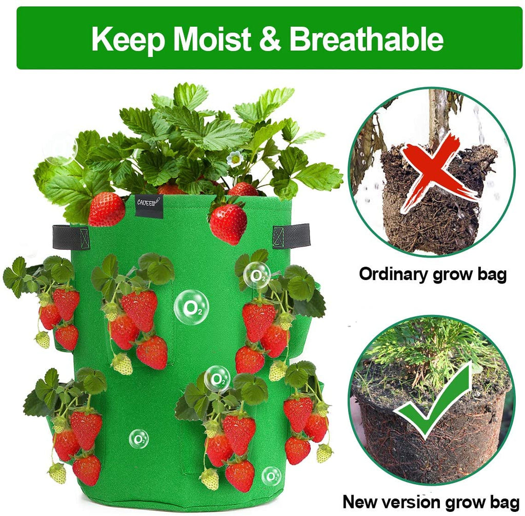 Strawberry Planting Bags