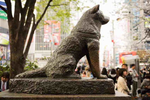 Statue of the legendary Akita Dog, Image Courtesy:Flickr