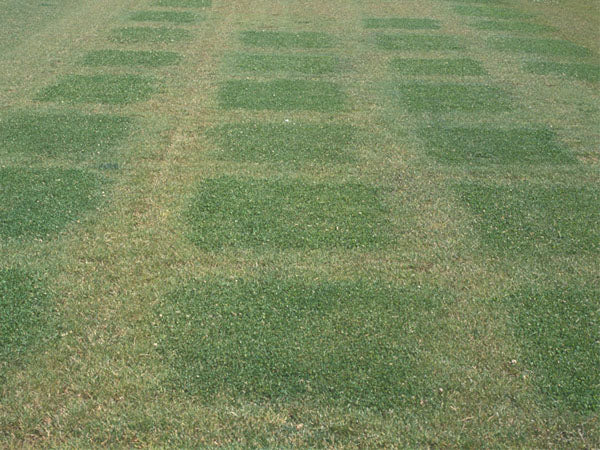Earth Turf Drought Trials