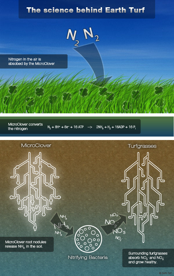 Earth Turf nitrogen fixation diagram