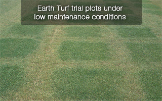 Earth Turf trial grass plots during drought