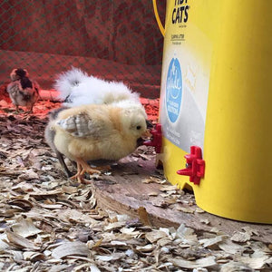 Horizontal Side Mount Chicken Waterer (4PCS)