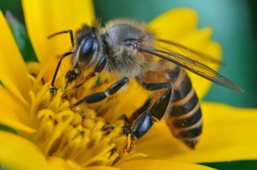 Reasons to 'bee' cheerful this spring!