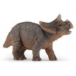 Young triceratops / Jeune
