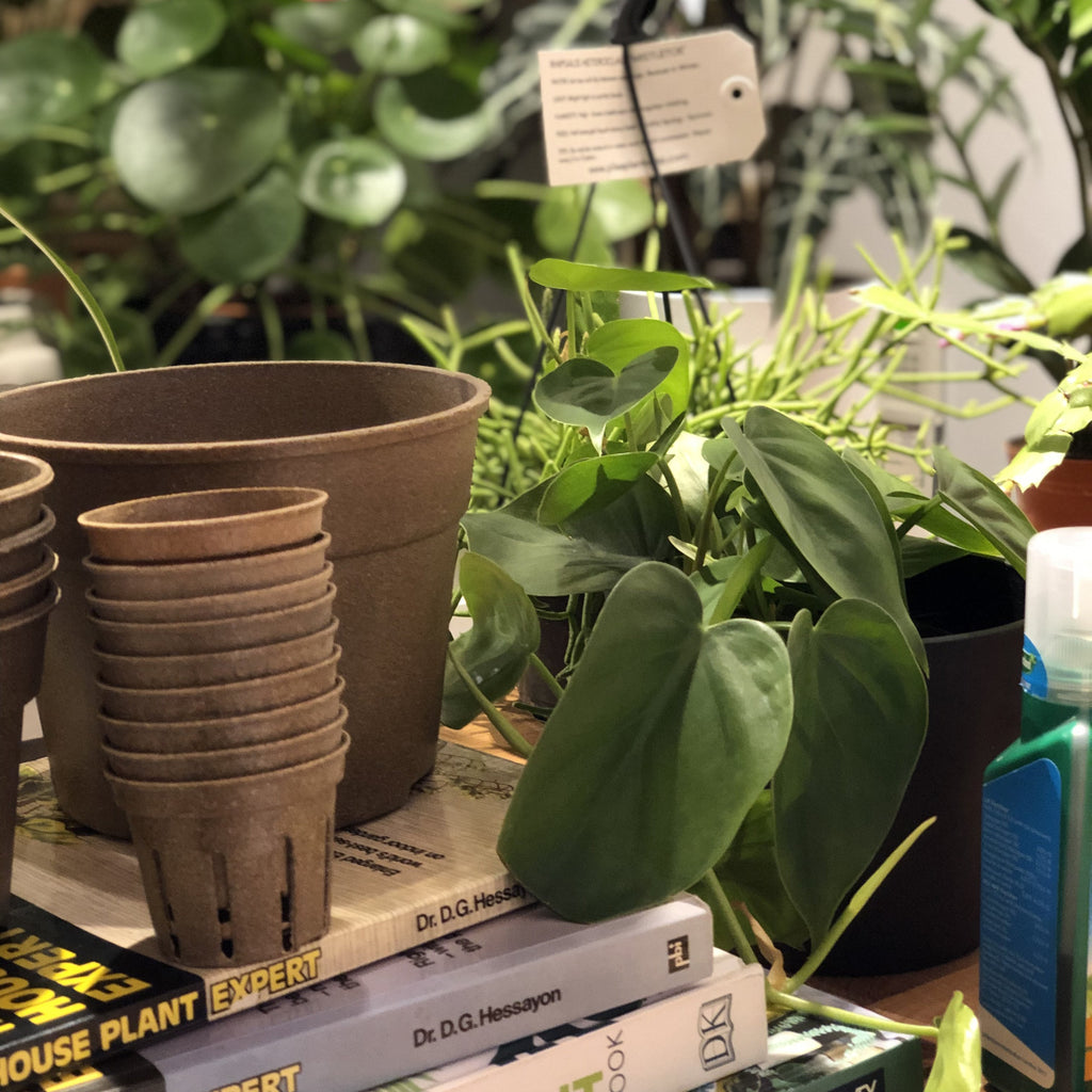 Introduction To Houseplants
