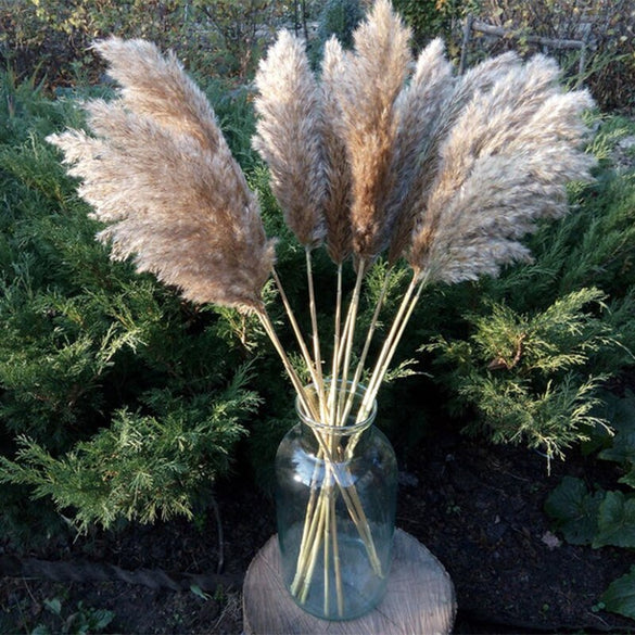 10 pcs 20pcs Free shipping real dried pampas grass decor wedding  flower bunch  natural plants decor