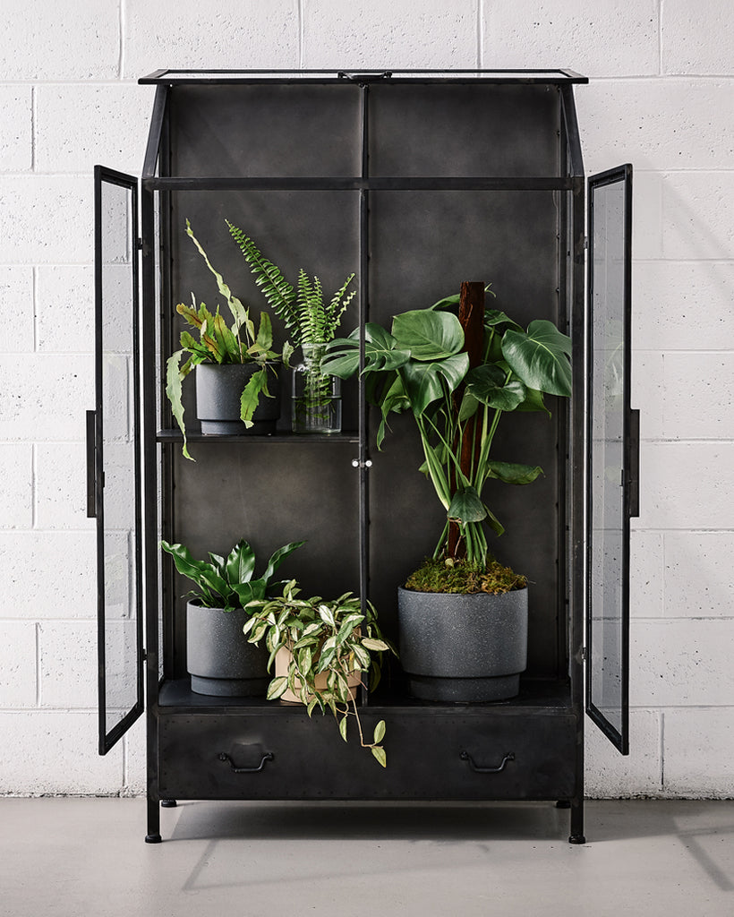 PLANT CABINETS
