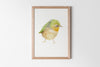Silver-Eye Finch Fine Art Print