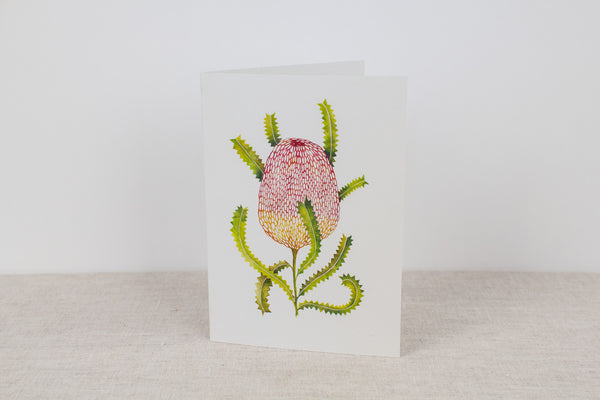 Blank card - Sawtooth Banksia