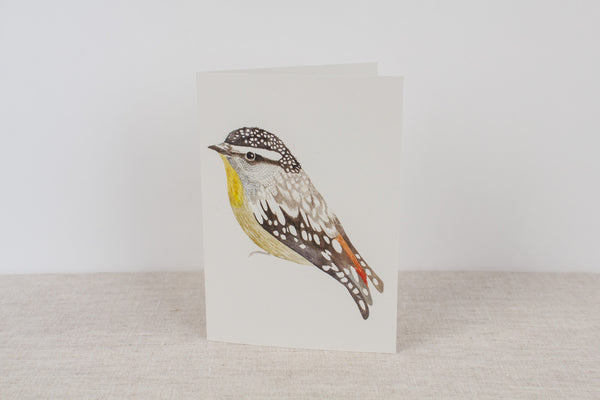 Blank card - Spotted Pardalote