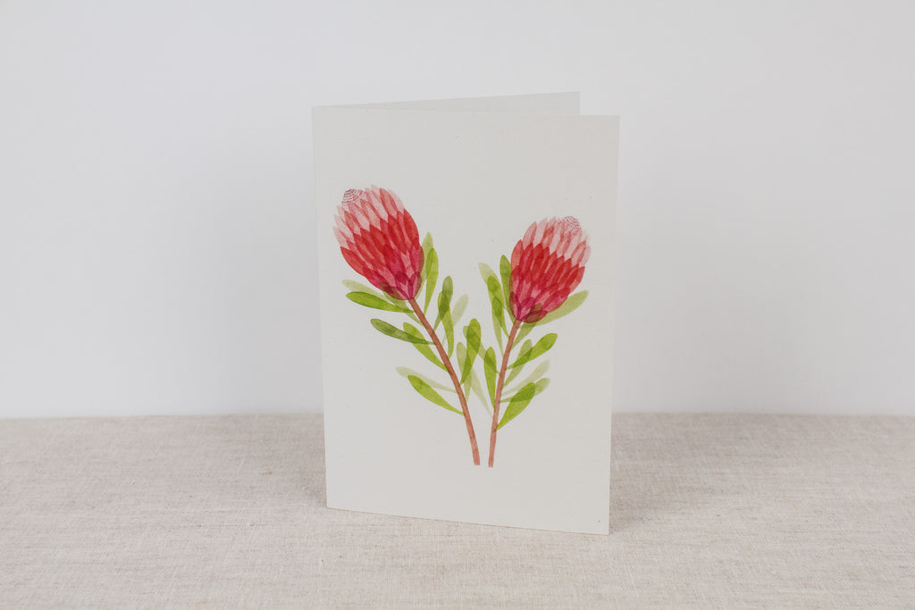 Blank card - Pink Ice Protea