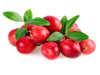 Cranberries are a vegan ingredient in our cricket dog food and our bsfl dog food. Cranberries is ideal for a sustainable eco-friendly vegan dog food. Cranberries are used in our raw pet food and dehydrated pet food. Northern Hound produces the most sustai