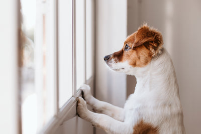 3 Ways To Help Transition Your Rescue Dog Out Of Quarantine