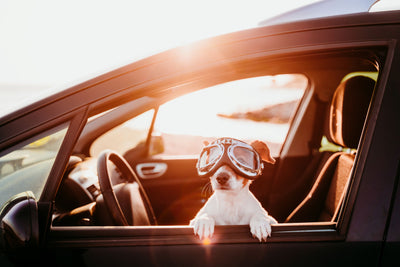 3 Ways To Help Your Rescue Dog Get Comfortable In The Car