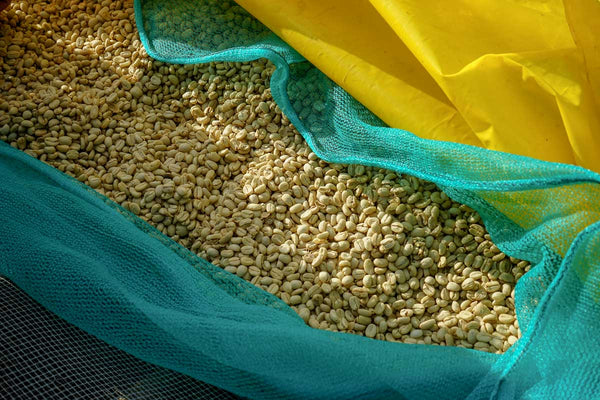 Bag of coffee beans in their silver skin