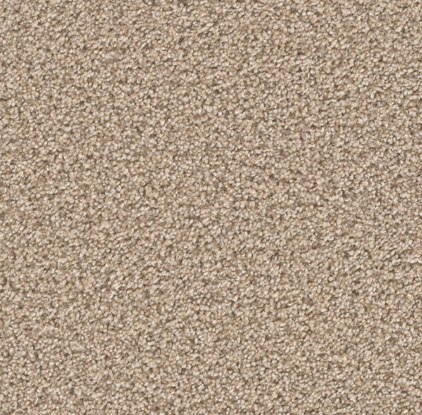 Dreamweaver Carpet | Can't Miss | -758 Oxford