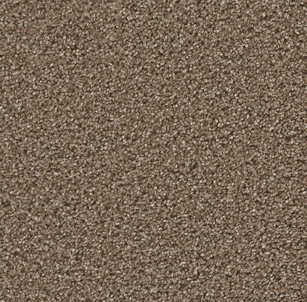 Dreamweaver Carpet | Can't Miss | - 753 Peppercorn