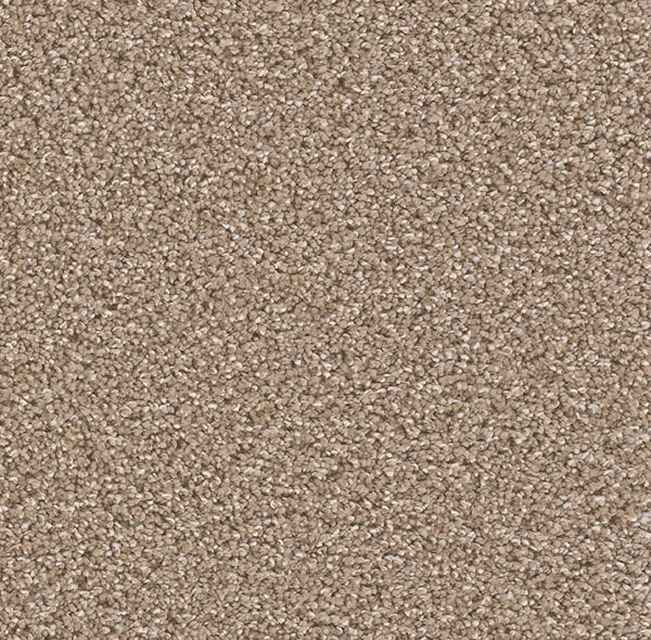 Dreamweaver Carpet | Can't Miss | - 858 Acorn