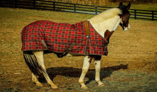 Everything You Need to Know About Horse Blankets