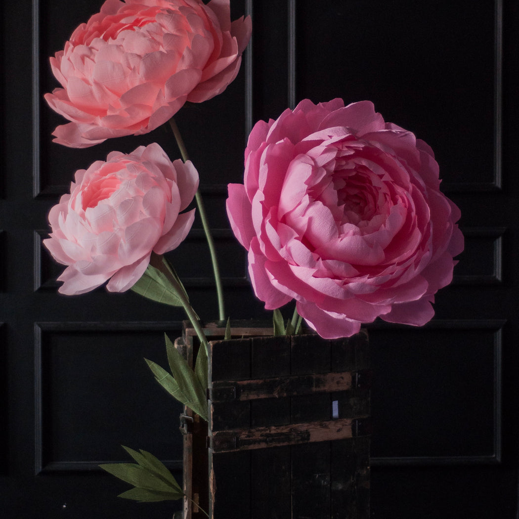 Set of 3 Oversized Paper Peonies - Mio Gallery